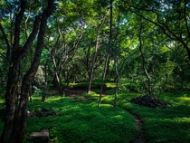 A forested area called Taljai situated in the heart of Pune cityIndia