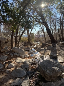 A forested oasis within the Chihuahuan Desert Smith Spring in Guadalupe Mountains National Park TX
