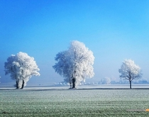 A Frost Storm Colored The Trees White Bavaria Germany