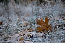 A frosty outline of leaves