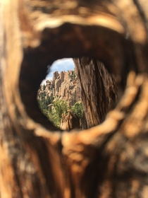 A glimpse of the crags Colorado through a hole in a tree