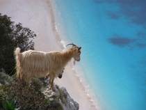 A goat over looks the ocean in Pilarei Greece
