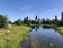 A goregous view of Chicago from Lincoln Park
