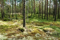 A gorgeous swedish summer forest