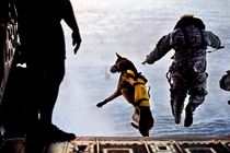 A Green Beret and his working dog jump off a CH- Chinook into the waters of the Gulf of Mexico