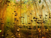 A group of tadpoles swimming
