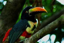 A happy toucan I found in Costa Rica during my honeymoon