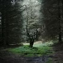 A Haunting Forest Lake District UK