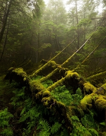 A hauntingly beautiful forest on the Isle of Skye Scotland