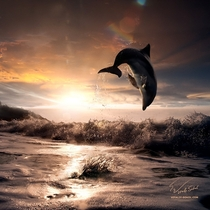A Hawaiian Bottle Nosed Dolphin at Sunset  photo by Vitaliy Sokol