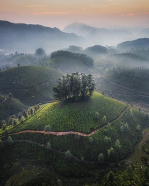 A hazy sunset at the tea plantations of Munnar India