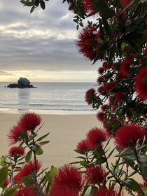 A hike I did to split apple rock beach to have my breakfast Kaiteriteri New Zealand