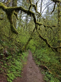 A hiking trail in Oregon