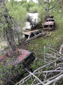 A line of abandoned old cars in the process of being overtaken by the deposition of sediment by the neighboring river in central Wyoming