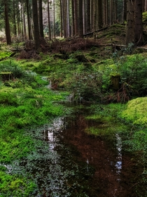 A little creek in the Hils mountains Lower Saxony Germany