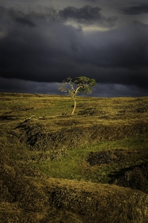 A lone tree amidst a break in a storm in Northern California x OC