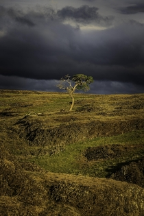 A lone tree amidst a break in the storm in Northern California OC x