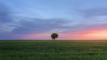 A lone tree emerges in the flatness of Spains central plateau at dusk
