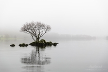 A lone tree in the mist on Coniston Water The Lake District