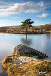 A lone tree on Kelly Hall Tarn The Lake District