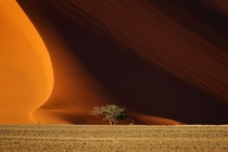 A lone tree sits in front of the Namibia Desert  by LukhinEfimova