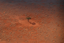 A lone tree stands among the mysterious Fairy Circles of Namibia -
