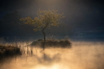 A lonely tree catching the first of the morning rays in Lake District UK