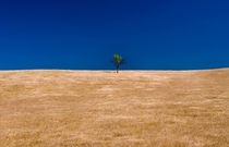 A lonely tree in the foothills below the Yolla Bolly wilderness area California