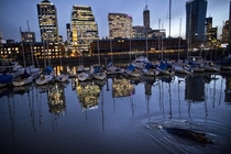 A lost whale bottom right swims near boats in an urban marina in Puerto Madero Buenos Aires Argentina on August   Natacha Pisarenko