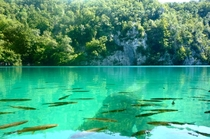 A luminescent lake Plitvice National Park Croatia