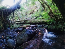A lush creek at camp Namanu Oregon