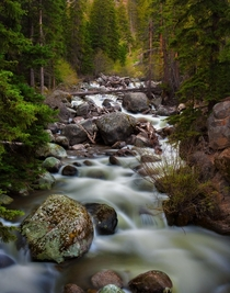 A lush river somewhere in Yellowstone National Park
