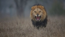 A man from Pakistan was almost attacked by a lion after going inside its home in Lahore Zoo Safari to get up-close and take photographs    Nature photographer Atif Saeed  told ABC News    the exhilarating experience was indescribable