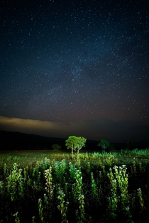 A meadow trees and part of the Milky Way from Thailand