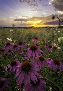 A midwestern sunset and wildflowers in NE Iowa