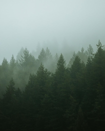 A misty forest on the banks of the Puget Sound WA  erik_young