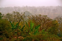 A misty morning in the jungle of Ooty India   x