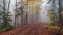 A misty trail in the Bavarian woods  Photographed by Sven Hunger