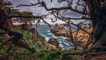 A moody afternoon at Point Lobos CA