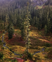 A moody fall colored meadow in the Mt Baker National Forest