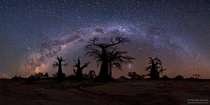A moonless starry night over Botswanas Baobab trees  By Hendri Venter