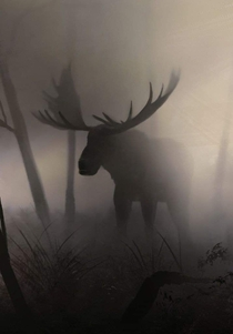 A moose in the fog