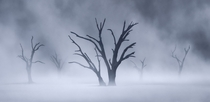 A morning dust storm on Deadvlei in Namibia OC