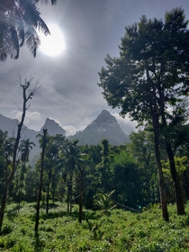 A morning mountain view in kerala  INDIA