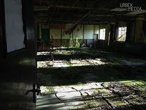 A Mossy Canteen In An Abandoned Factory