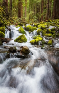 A mossy cascade in Olympic National Park WA