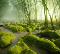 A mossy swamp in Romania  photo by Adrian Borda