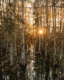 A mountainless Everglades National Park Florida