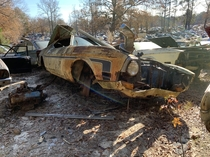 A  Mustang Mach  rusting away in a local junkyard
