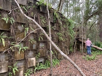 A mysterious concrete wall I found in the woods of North Florida Its origin is currently unknown